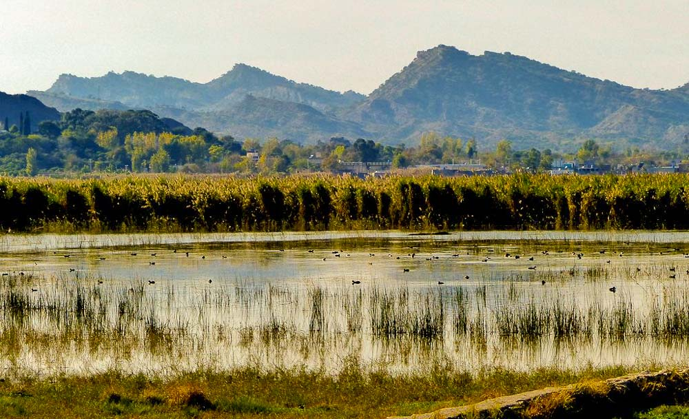 The lake called Kallar Kahar - home for migratory birds from Siberia in the winter.