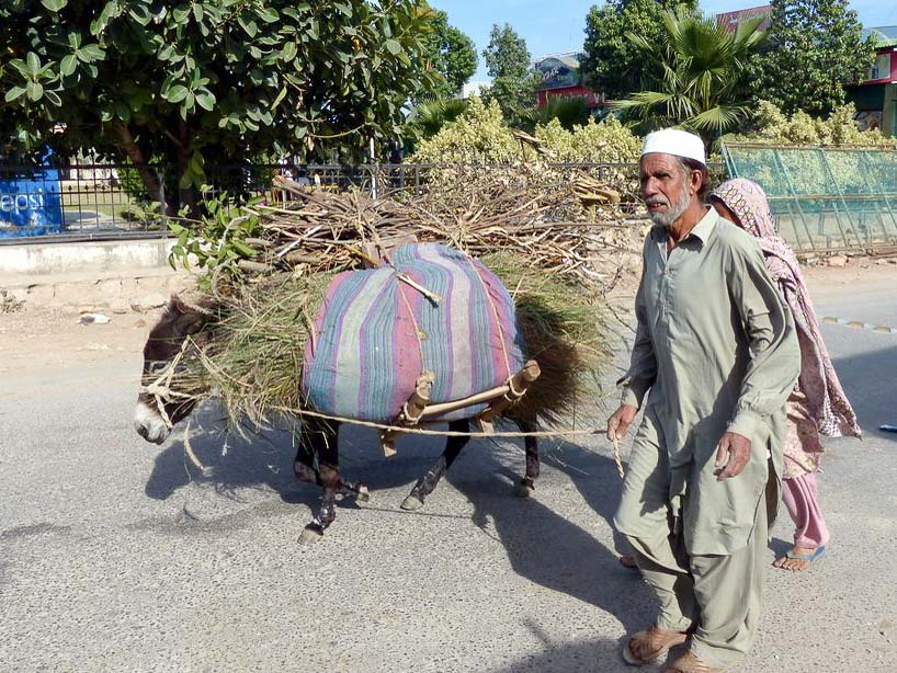 We stopped to try some aloo pakora (deep fried potato) and this donkey loaded down with hay and firewood walked by.