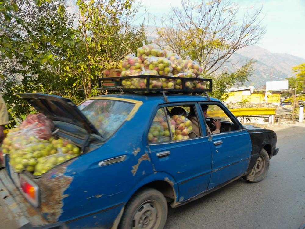 Apples are in season! So, let's load them up in the family sedan and take them to market.