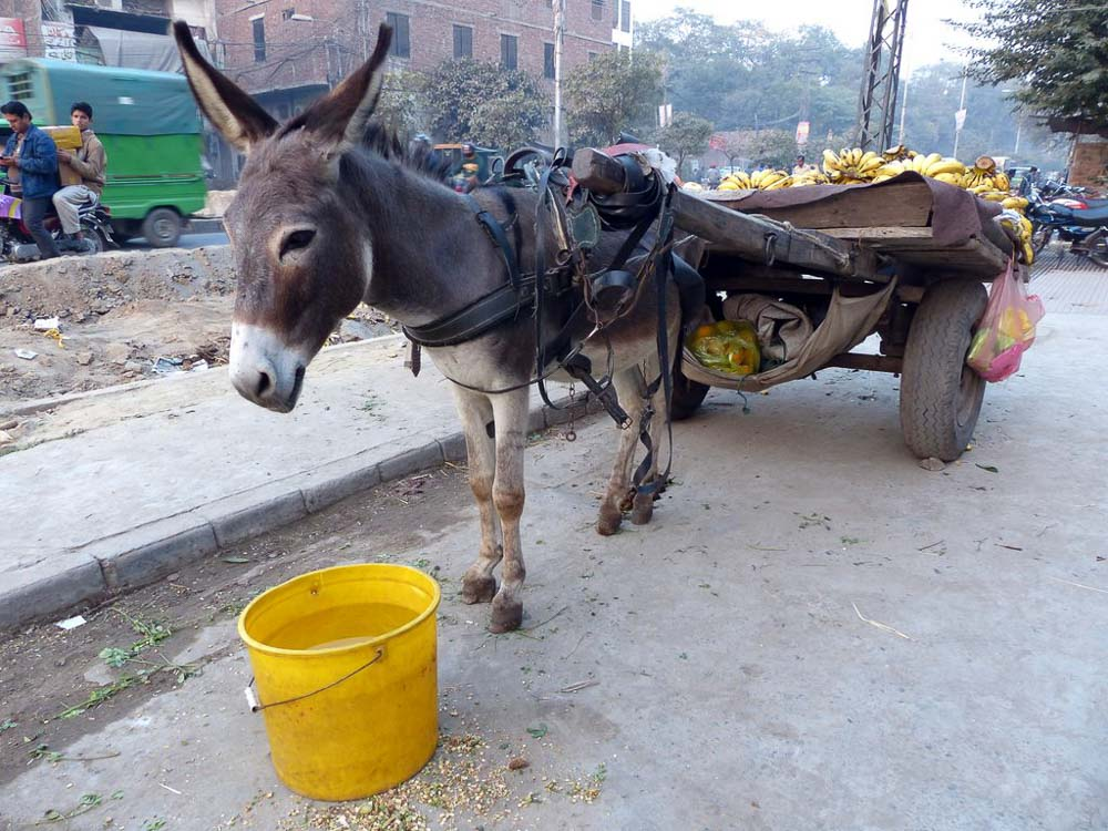Donkey with a cart full of bananas just outside the Bunyaad office.
