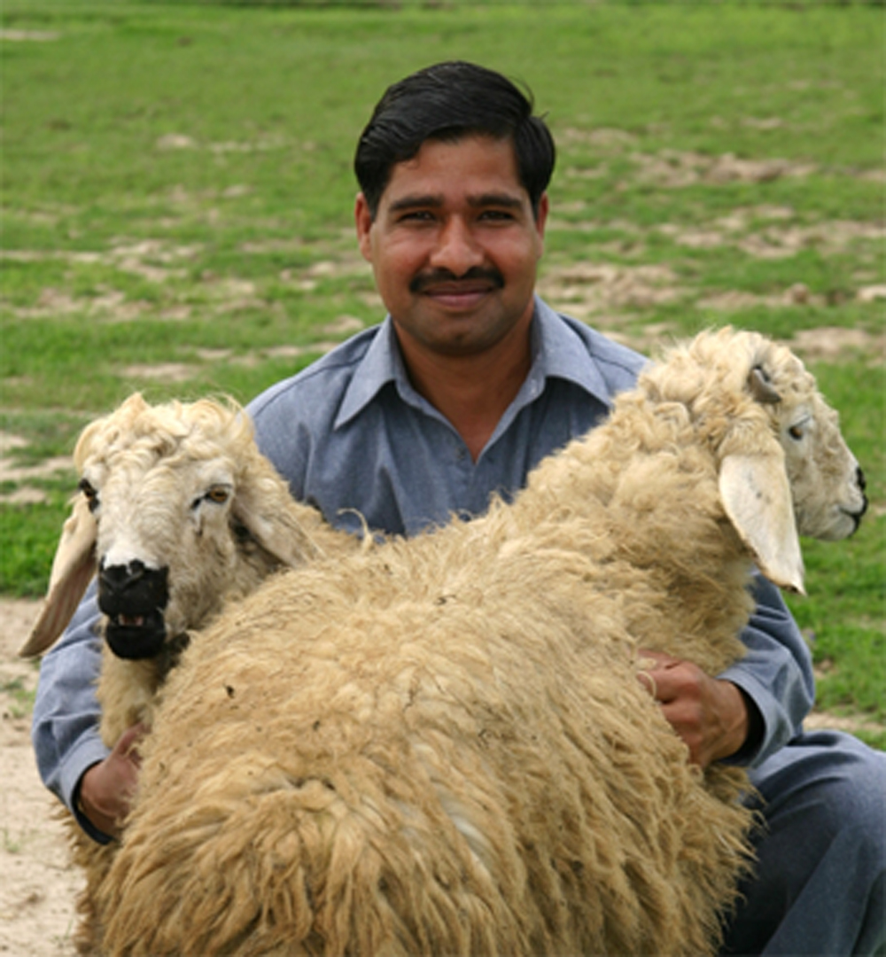 Pola and his dhumba sheep
