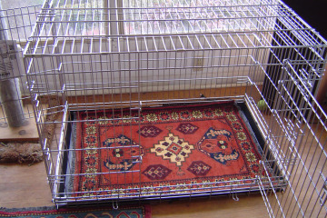 Rug in dog cage